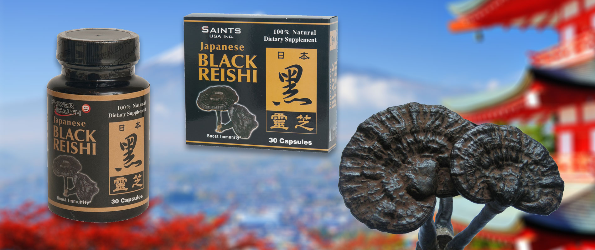 Japanese Black Reishi
